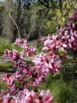 Spring Flowers 04 012